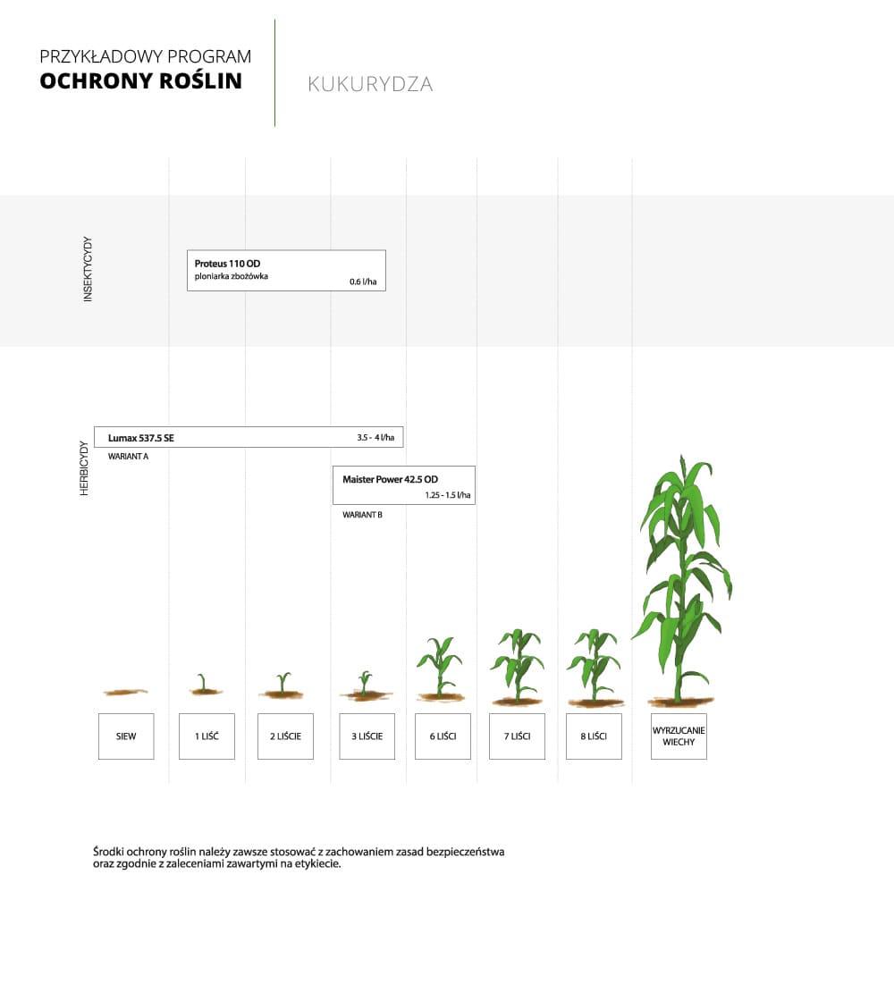 program ochrony roslin kukurydza